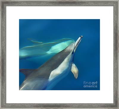 Dana Point Dolphins Ascending Framed Print