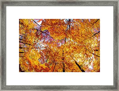 Framed Print featuring the photograph Dance Of The Autumn Trees by Kimberleigh Ladd