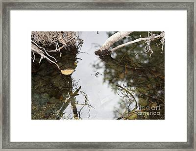 Dance Of The Water Spider Framed Print by Jane Whyte