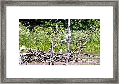 Dancing Cranes Framed Print by Bob Niederriter