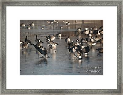 Framed Print featuring the photograph Dancing Geese by Mark McReynolds