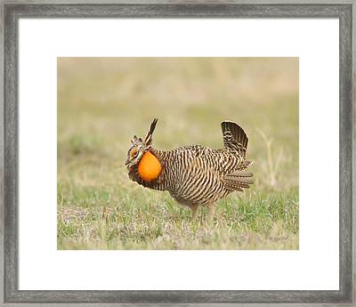 Framed Print featuring the photograph Dancing In The Morning by Gerry Sibell