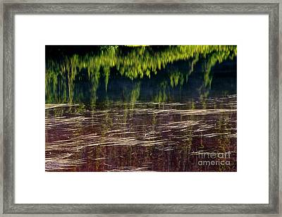 Dancing On Water Framed Print by Marcus Angeline