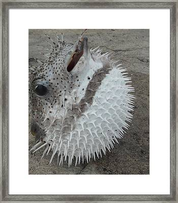 Dancing Pufferfish Framed Print
