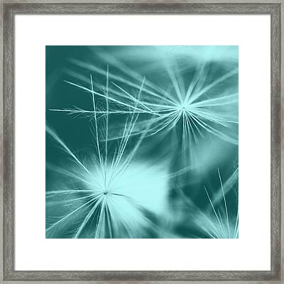 Dandelion Art 2 Framed Print by Falko Follert