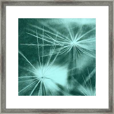 Dandelion Art 3 Framed Print by Falko Follert
