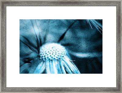 Dandelion Art 4 Framed Print by Falko Follert