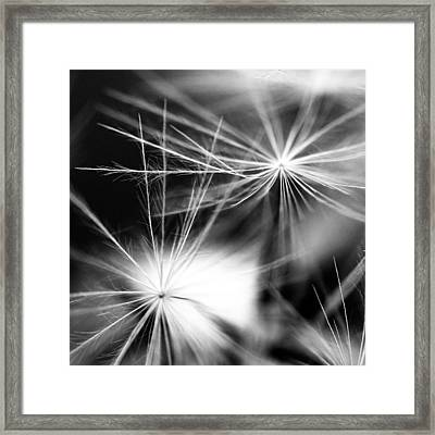 Dandelion Bw Framed Print by Falko Follert