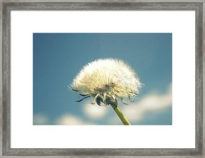 Dandelion Daydreams Framed Print