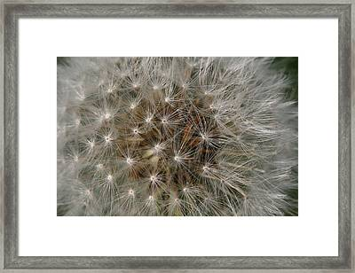Framed Print featuring the photograph Dandelion Fairy Seeds by Peg Toliver