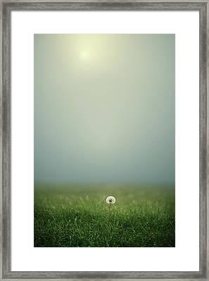 Dandelion On Meado Framed Print by Elisabeth Schmitt