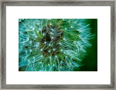 Dandelion Puff-green Framed Print
