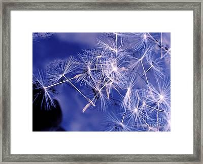Dandelion Seeds Floating On Water Framed Print by Kaye Menner