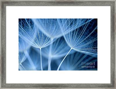 Dandelion Seeds Framed Print by Neil Overy