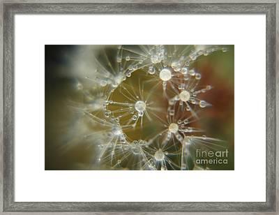 Dandelion Seeds Framed Print by Yumi Johnson
