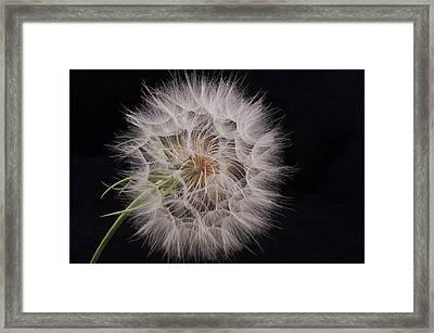 Dandelion Silhouette Framed Print by Ivelina G