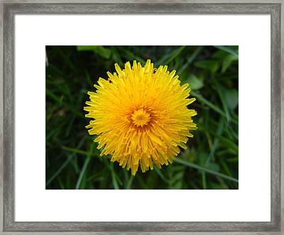 Dandelion Framed Print by Vix Views
