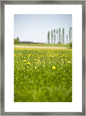 Dandelions Growing In Meadow Framed Print by Stock4b-rf