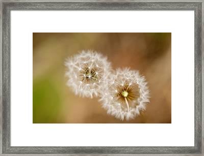 Dandelions Framed Print by Perry Van Munster
