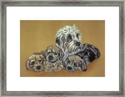 Dandie Dinmont Terriers Framed Print by Patricia Ivy
