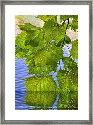 Dangling Leaves Framed Print by Deborah Benoit