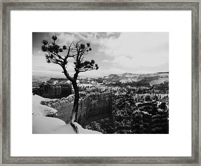Dan's Eye View Of Bryce Framed Print
