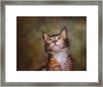 Daphne #2 Framed Print by Pat Abbott