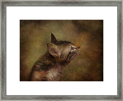 Daphne In Profile Framed Print by Pat Abbott