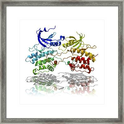 Dapk3 And Pyridone 6 Proteins Framed Print by Laguna Design