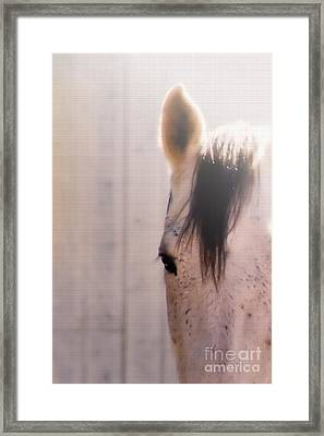 Dapple Devotion Framed Print by Betty LaRue