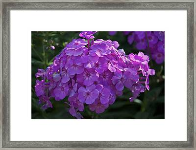 Framed Print featuring the photograph Dappled Light by Joseph Yarbrough
