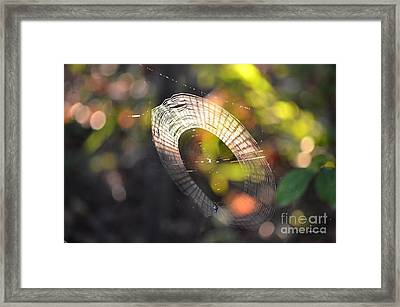 Dappled Web Of Deceit Framed Print by Maria Urso