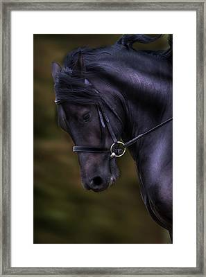 Dark Bay Horse Head Framed Print
