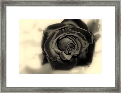 Framed Print featuring the photograph Dark Beauty by Kay Novy
