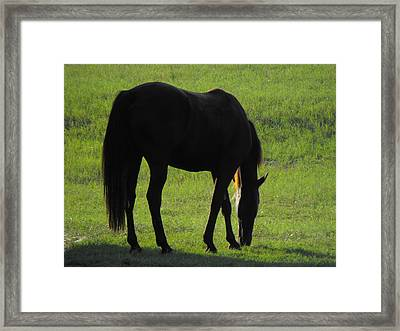 Dark Beauty Framed Print by Rebecca Cearley