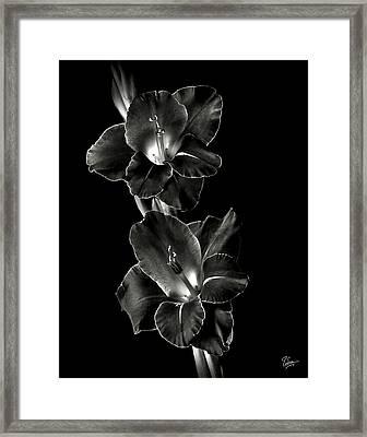 Dark Gladiolas In Black And White Framed Print