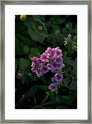 Framed Print featuring the photograph Dark by Joseph Yarbrough