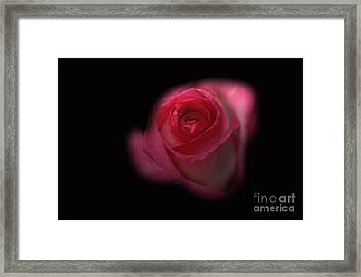 Framed Print featuring the photograph Dark Rose by Michael Waters