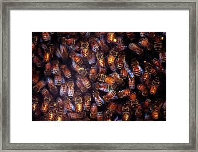 Dark Swarm Attack Framed Print by LeeAnn McLaneGoetz McLaneGoetzStudioLLCcom