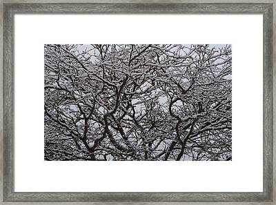 Dark To Snow White Framed Print