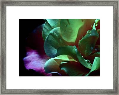 Darling Framed Print by Monroe Snook