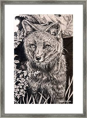 Darwin's Fox Close Up Framed Print by Carmen Del Valle