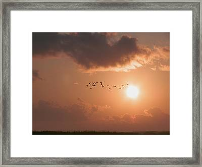 Dawn Flight Framed Print