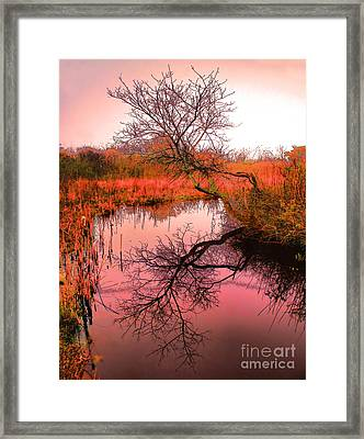 Dawn On The Marsh Framed Print by Nick Zelinsky
