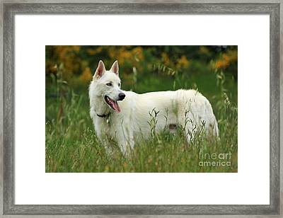 Day At The Dog Park Framed Print by Tyra  OBryant
