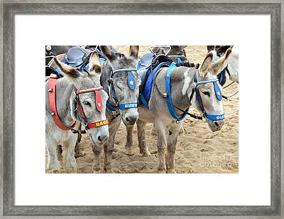 Day At The Seaside Framed Print by Andrew Barke