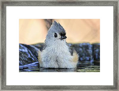 Day At The Spa Framed Print by Bonnie Barry