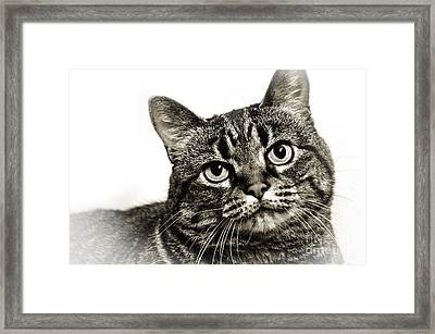Day Dreamer Framed Print by Andee Design