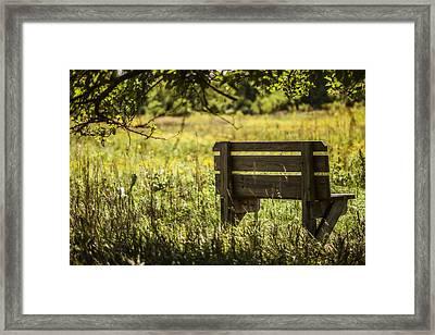 Day Dreaming Of Summer Framed Print