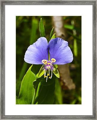 Day Flower Framed Print by Mark Weaver